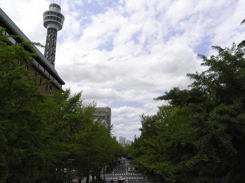 新緑とマリンタワー