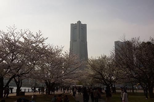 桜@汽車道